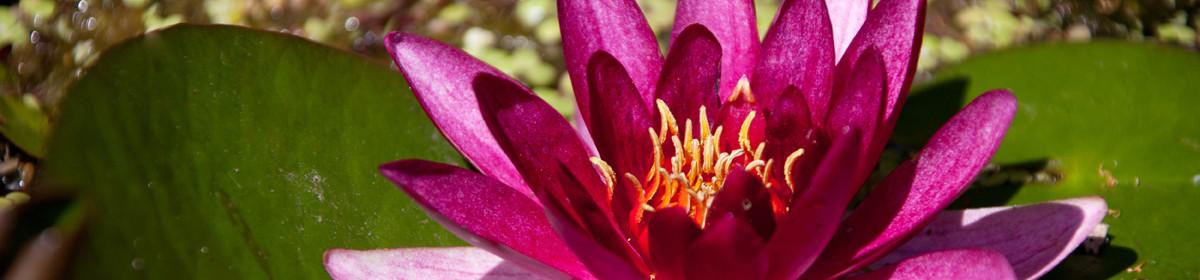 Lotus Wellspring Healthcare